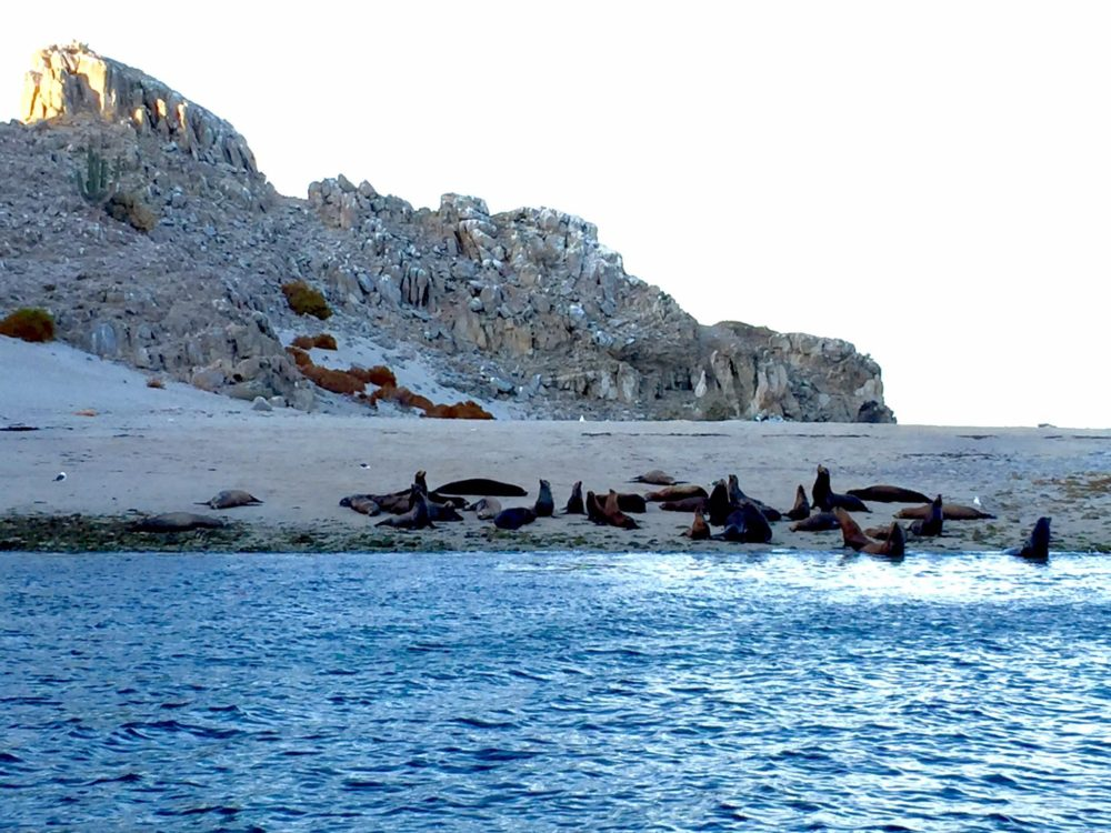 sea lions on a beach