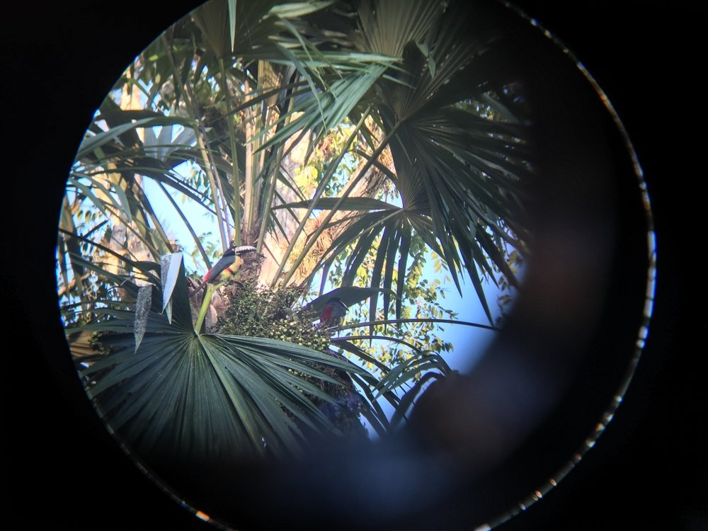 A pair of toucans through binoculars