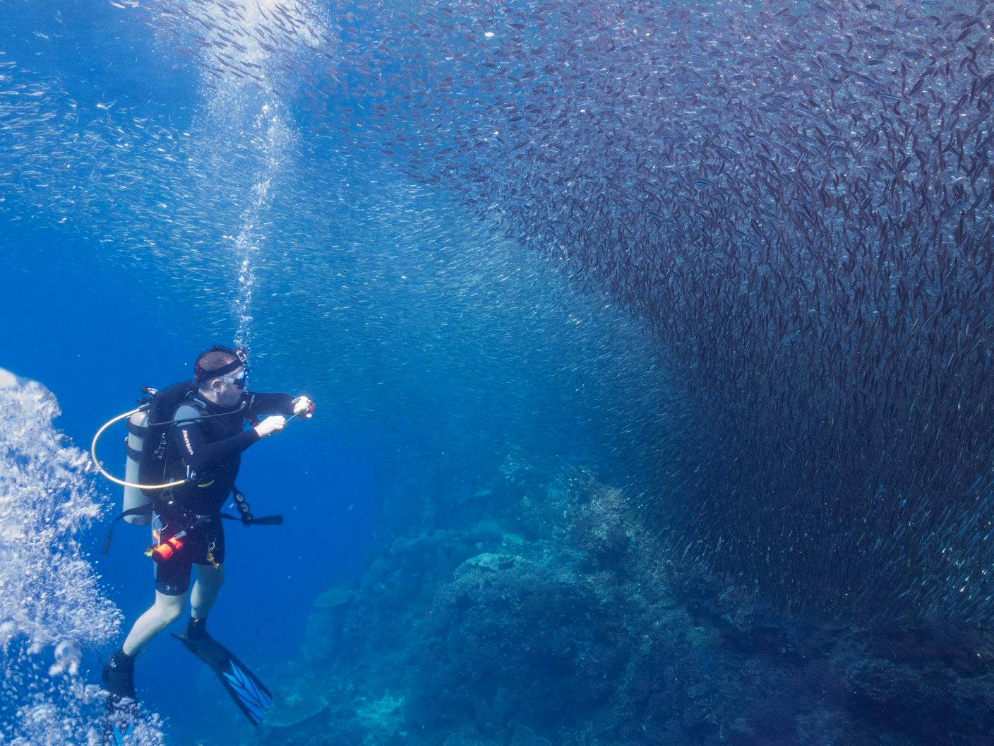 Diving in Raja Ampat, Indonesia. Swarms of silversides