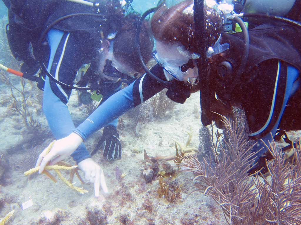 Diving in Key Largo with the coral reef foundation planting corals