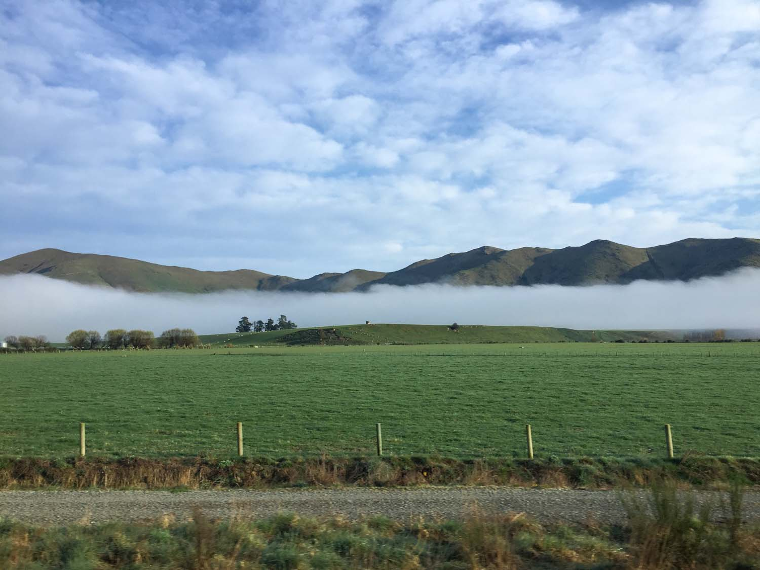 fog settled on a field on the road from Queenstown to Milford Sound