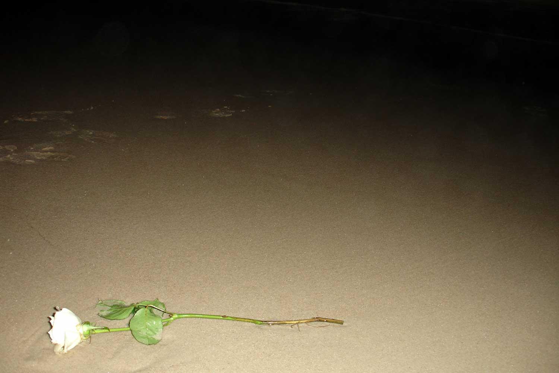A white rose laying on Copacabana beach
