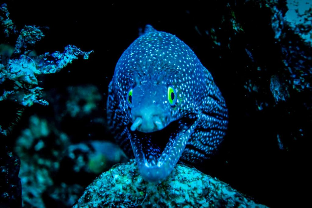 diving komodo national park with moray eels