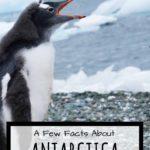 baby gentoo penguin pinterest