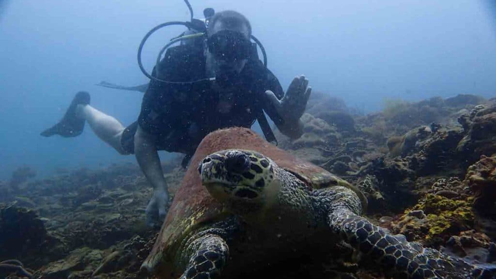 Michael with a large turtle while diving in Kota Kinabalu