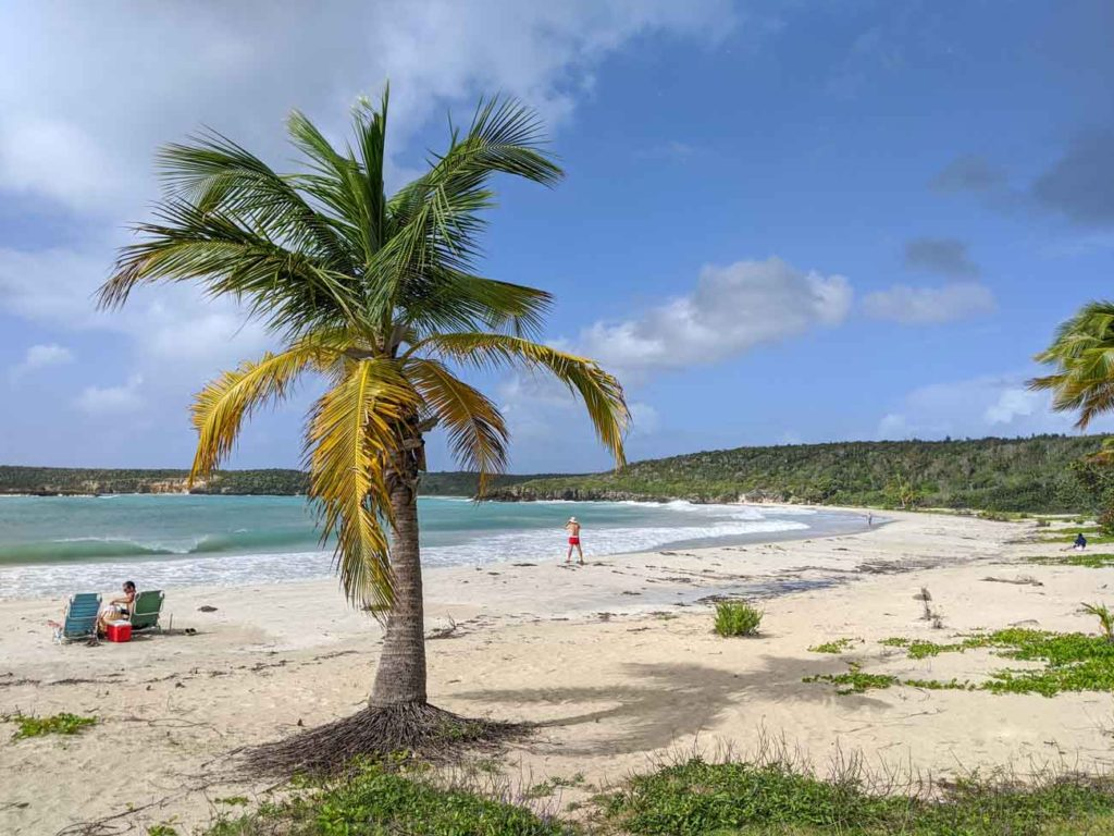 Caracas Beach in Vieques, Puerto Rico. A palm tree in the foreground and two sunbathers in the background.